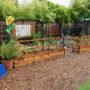 Large-Raised-Bed-Redwood-Garden-School